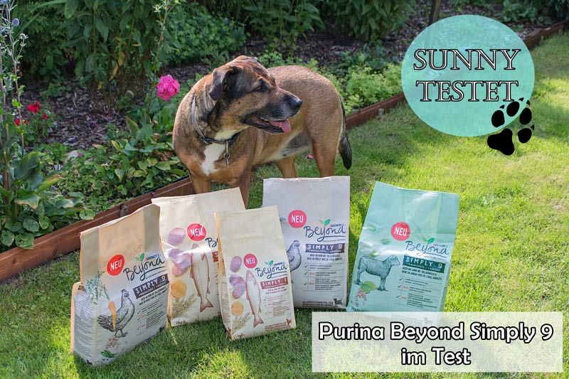 Purina-Beyond-Simply-9-Thump