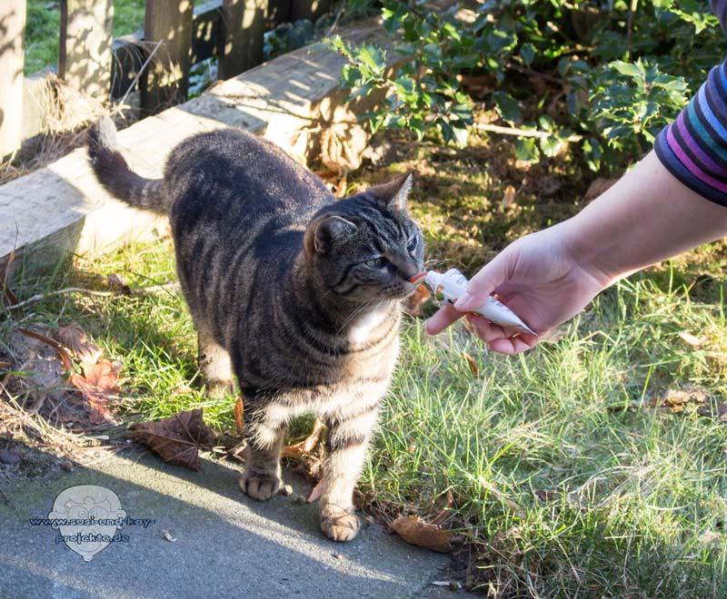Bella-Testet-Katzen-Superfoods