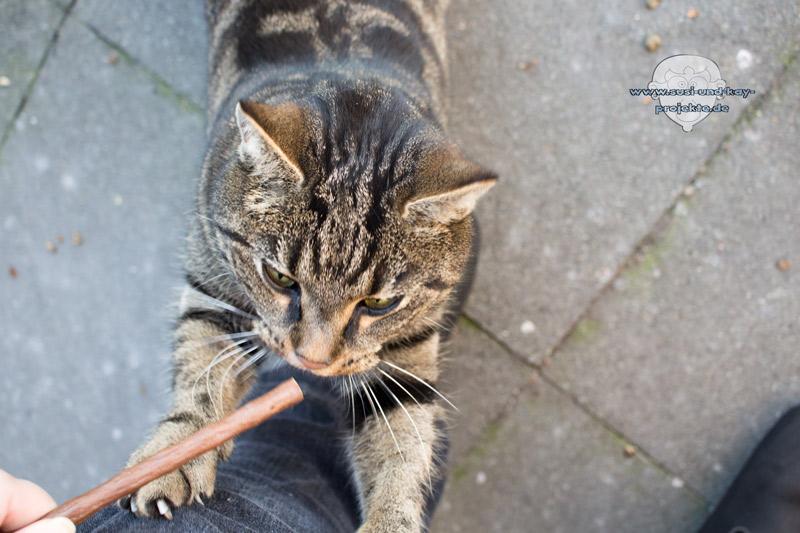 Gimcat-Katzen-snacks-Bella