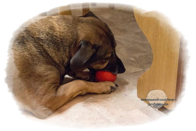 Hunde-Spiel-Snackball