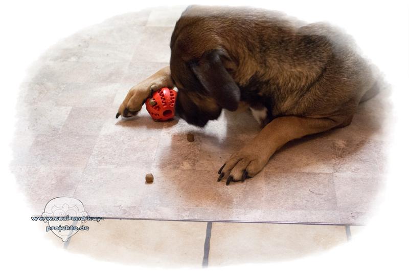 Hunde-Spielball-Sunny-Testet