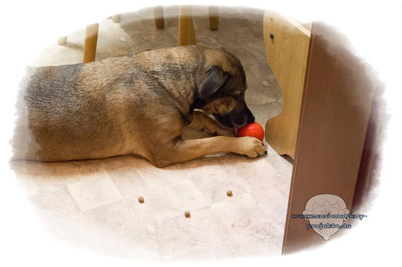 Hunde-Spielzeug-Sunny