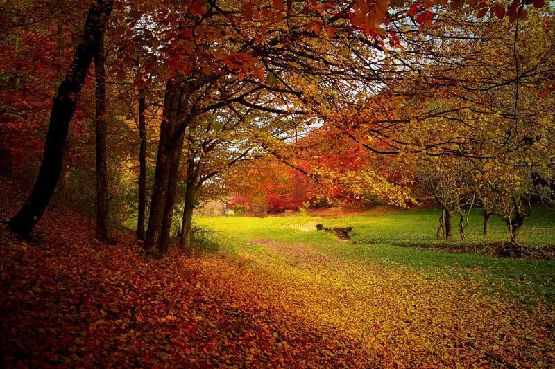 Herbstzeit-kik
