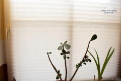 Raumtextilienshop-Sensuna-Maßplissee-Tageslicht-Fenster