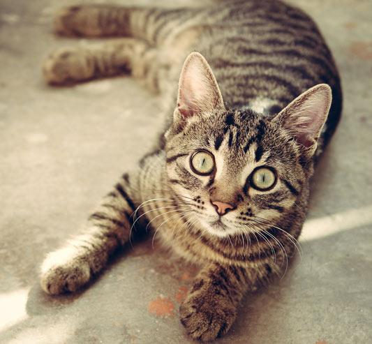 Vitakraft-Bella-Testet-Katzenfutter