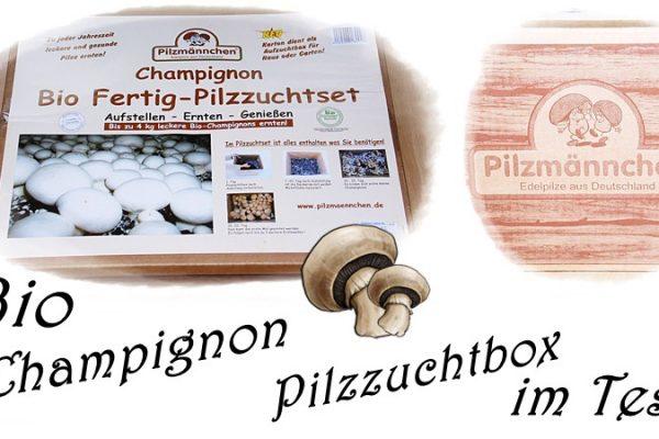 Pilzmännchen Pilzzuchtset