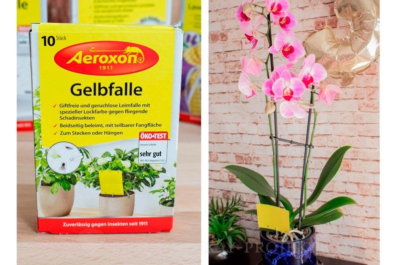 Ungeziefer-frei-mit-Aeroxon-Gelbfalle