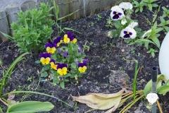 Garten-Bunte-Blumen
