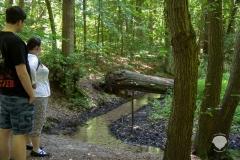 Klostermühle-Heiligenberg-Wald