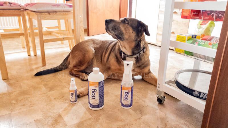 Saltisept-Umweltfreundlich-Desinfektion-für-Hunde