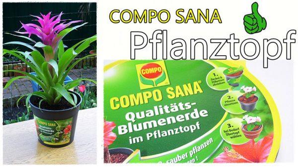 COMPO SANA Pflanztopf Beitragsbild